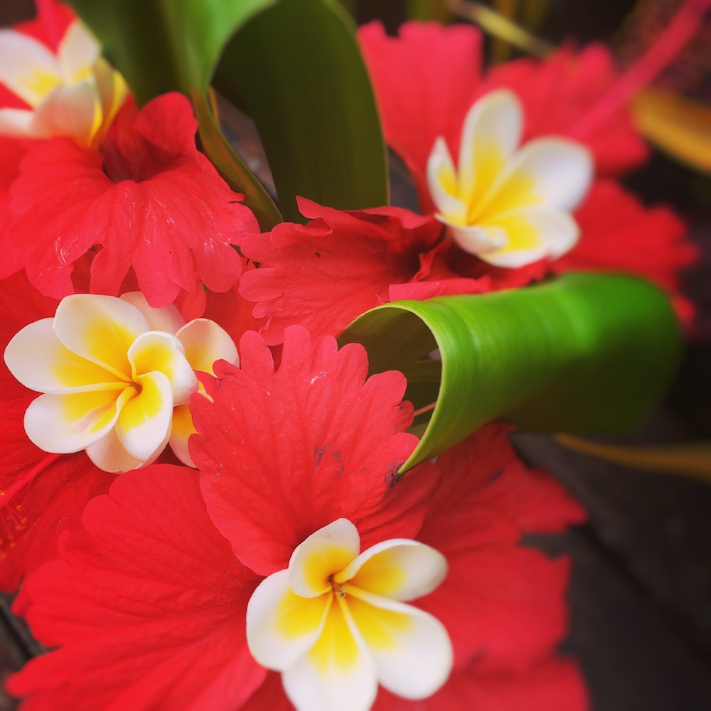 Frangipanis of Fiji